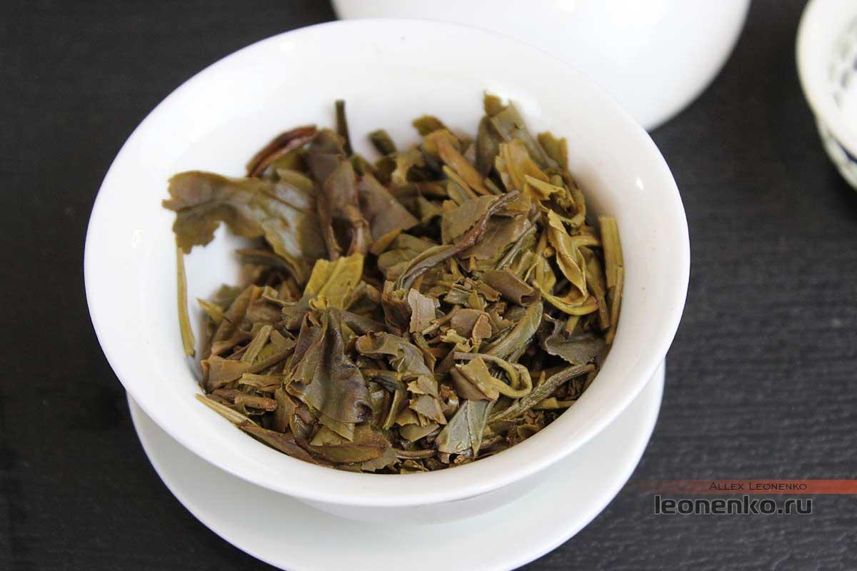 Гу Шу шен пуэр от Ботаника, чайное дно