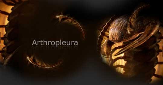 arthropleura