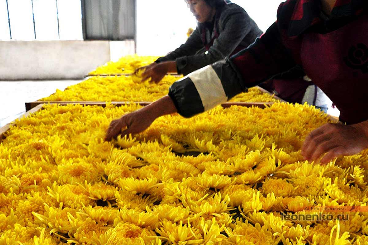 Сушка цветков хризантемы