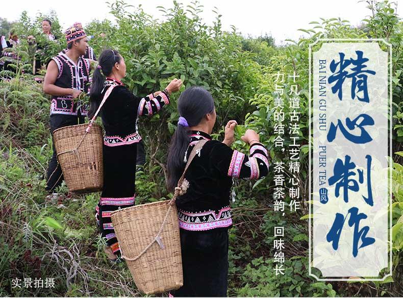 Сбор чайного сырья - чайная фабрика Бан Хай